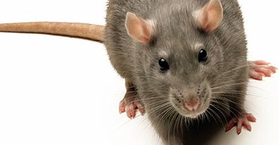 ThreatSTOP Blocks Adwind -- new Cross-Platform RAT